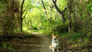 bosque-oruga